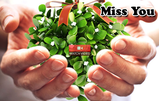 Mistletoe Miss You!