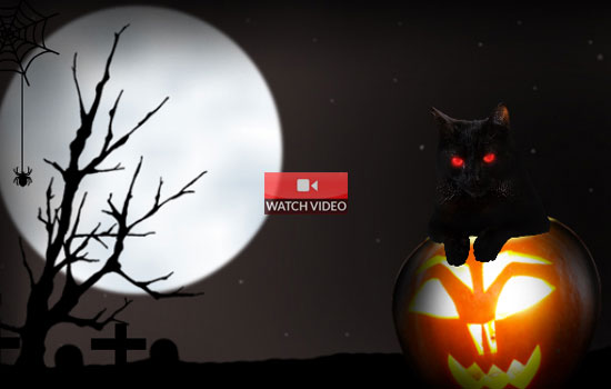 Have a Purrfect Halloween!