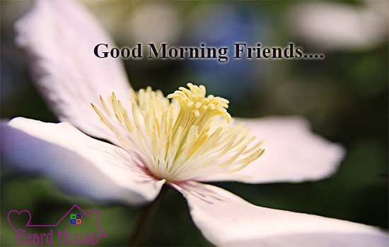 Good Morning Friends.