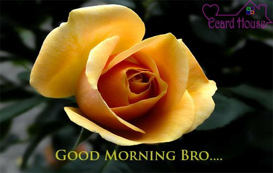 Good Morning Bro