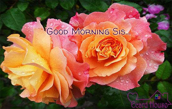 Good Morning Sis