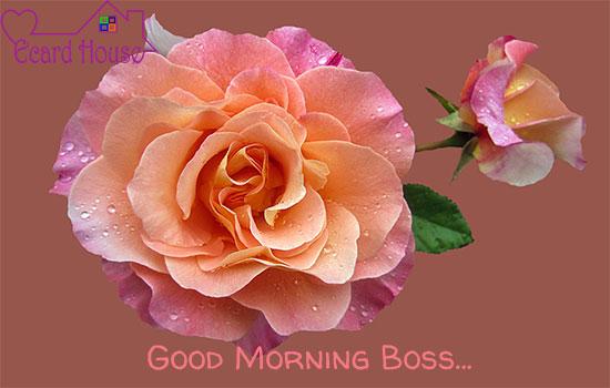 Good Morning Boss