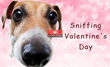 Sniffing Valentine